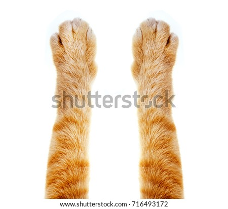 cat paw isolated on white background Royalty-Free Stock Photo #716493172