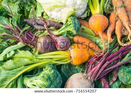 A Closeup view of fresh vegetables. carrots, cauliflower, purple carrots, red onions, broccoli, beetroot and yellow beetroot. #716554207
