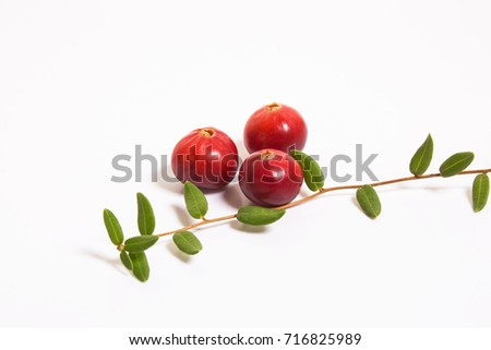Three cranberries and a sprig with leaves on a white background. Studio, macro. #716825989