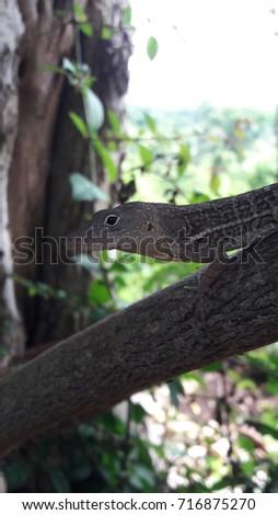 Eye see you lizard #716875270