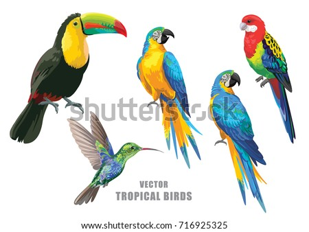 Tropical birds collection: parrots, humming-bird and toucan. Vector design isolated elements on the white background.