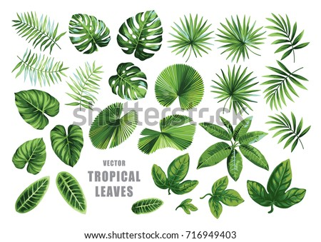 Tropical leaves collection. Vector isolated elements on the white background. Royalty-Free Stock Photo #716949403