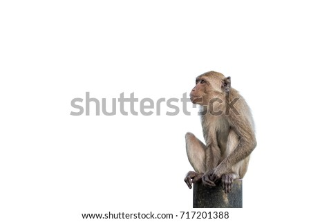 Isolated monkey sitting on a steel