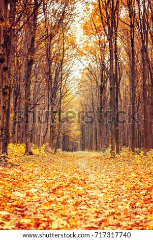 Photo of beautiful orange autumn forest with leaves and road #717317740