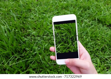 Woman hand using smartphone taking photo of green grass #717322969