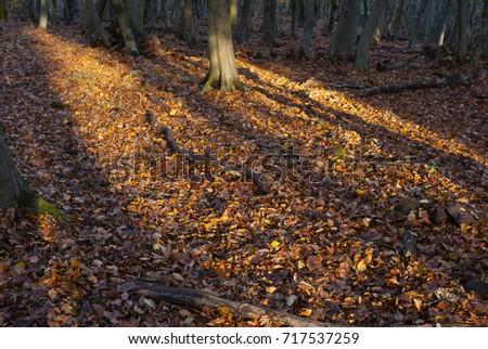 autumn forest #717537259