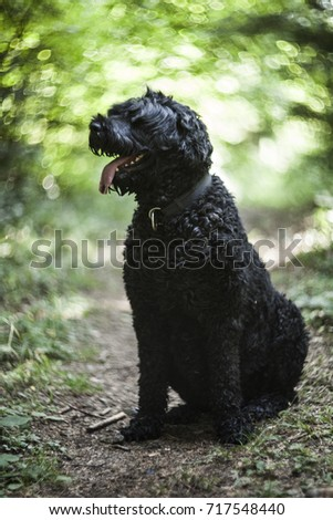 Black Russian terrier in a forest with swirl lens bokeh background #717548440