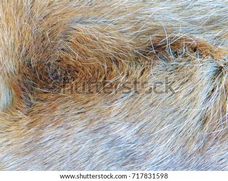 Background, texture, wool, hair. Warm. #717831598