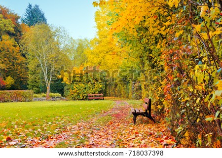 Autumn landscape with wooden bench under bright sunlight in autumn forest.
