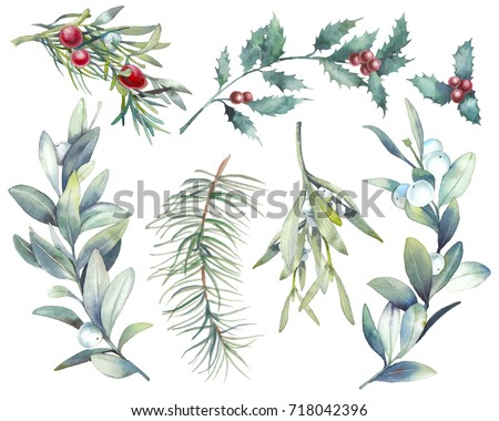 Watercolor Christmas plants set. Hand drawn botanical elements isolated on white background. Branches with berries, spruce, holly, mistletoe for modern natural design