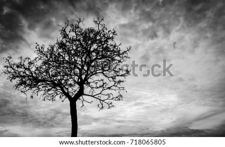 Silhouette dead tree  on dark dramatic sky background for scary or death. Halloween night background. Hopeless and despair concept. Creepy and spooky scene. Scary forest. Horror night on Halloween day Royalty-Free Stock Photo #718065805