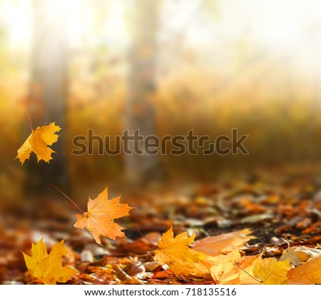 Beautiful autumn landscape with yellow trees and sun. Colorful foliage in the park. Falling leaves natural background  #718135516