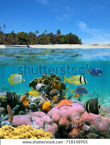Over and under sea surface split image near a tropical island with sandy beach and colorful marine life with tropical fish underwater #718148905