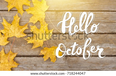 Golden autumn maple leaves on sunny day. Great season texture with fall mood. Nature september and october background with hand lettering Hello October.  #718244047