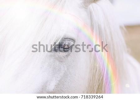 Unicorn horse with a rainbow