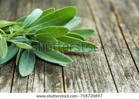 Salvia officinalis. Sage leaves on old wooden table. Garden sage. #718720897