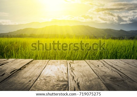 old brown wooden floor beside green rice field in the evening and beam sunset #719075275