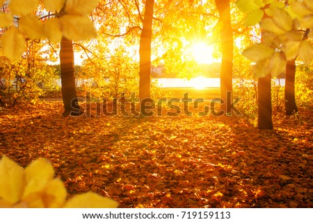 Autumn leaves on the sun and blurred trees . Fall background. #719159113