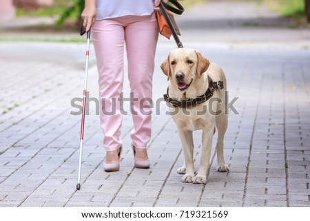 Guide dog helping blind woman in the city #719321569