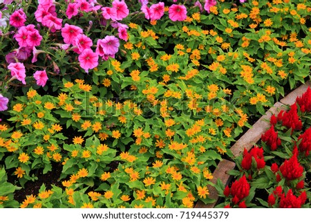 Variety of colorful flowers including ornamental foliage planted in the park.Is a gardening idea #719445379