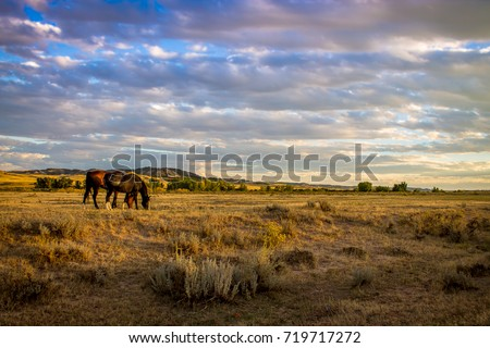 ranch horses  Royalty-Free Stock Photo #719717272