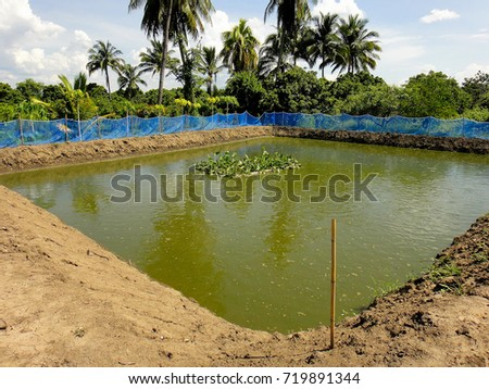 This picture show earth pond of Freshwater fish at Aquaculture farm