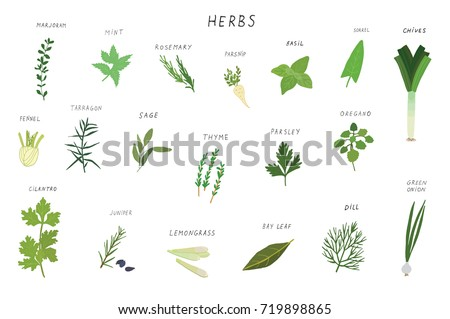 Herbs spices green illustrations set. #719898865