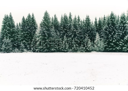 Spruce tree forest covered by fresh snow during Winter Christmas time. This winter scene is almost duotone due to the contrast between the frosty spruce trees, white snow foreground and white sky. Royalty-Free Stock Photo #720410452