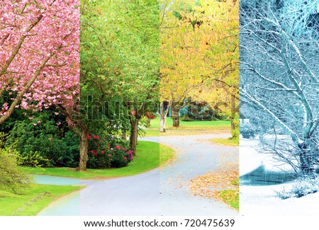 A composite collage of four image of the same street lined with cherry trees, photographed in all four seasons from the exact same location. Branches in the trees line up perfectly.  #720475639