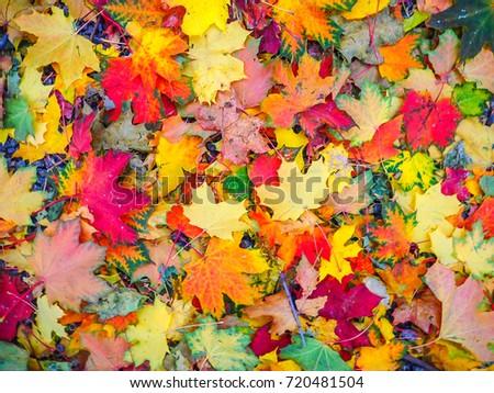 leaves #720481504