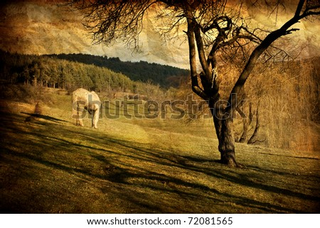 vintage landscape with white horse