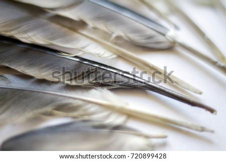 bird feathers #720899428