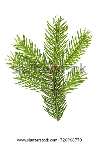 Fir branch isolated on a white background #720968770