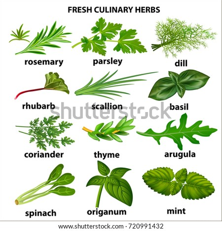 Illustration of a set of culinary herbs for a restaurant #720991432