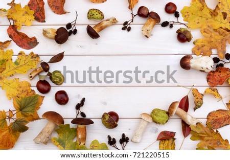 Autumn mushroom boletus on wooden background. Top view.  #721220515