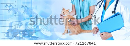 Veterinarian doctor with cat in veterinary clinic. #721269841