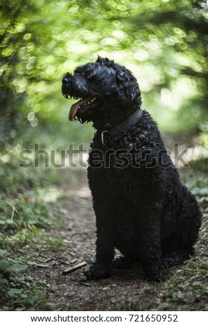 Black Russian terrier in a forest with swirl lens bokeh background #721650952