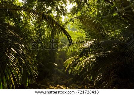 India mountain jungle #721728418