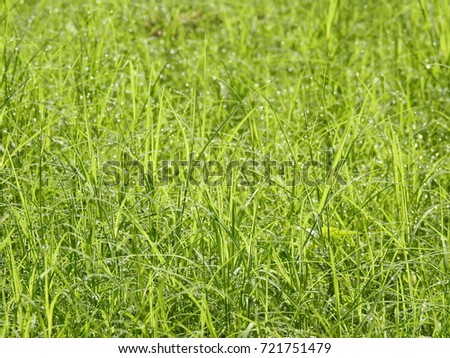 Bright fresh green color long Grass in garden #721751479