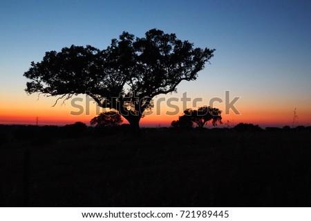 Dusk tree #721989445