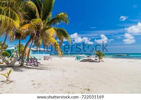 Palms and beach at Caye Caulker island, Belize #722031169