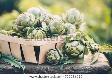 Freshly harvested artichokes in a garden, Vegetables for a healthy diet. #722286292