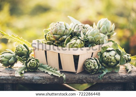 Artichokes in the box against the green of the garden. Vegetables for a healthy diet. #722286448