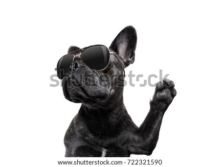 cool trendy posing french bulldog with sunglasses looking up like a model , isolated on white background, with paw high five #722321590