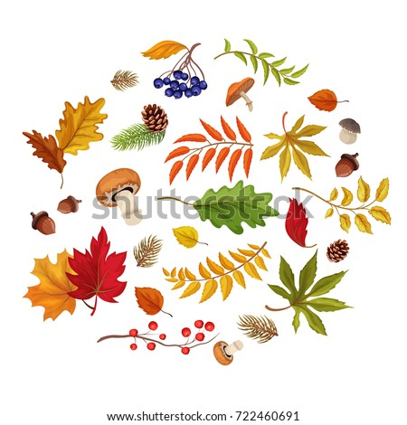 Autumn leaves, pumpkin mushrooms , forest berries, mushrooms on isolated white background. Vector fall symbols poster, banner placard design template #722460691