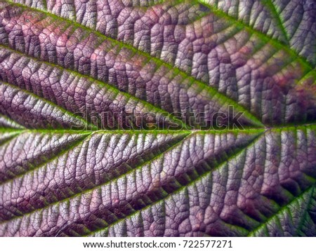 Photos of plant parts at high magnification #722577271
