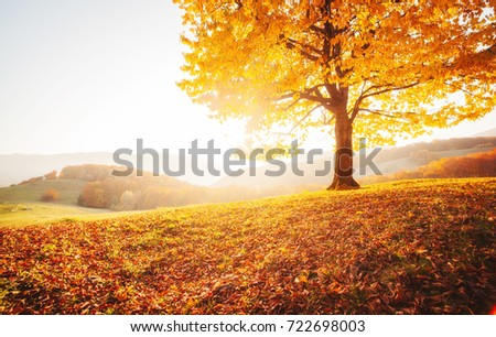 Awesome image of the shiny beech tree on a hill slope at mountain valley. Dramatic scene. Orange and yellow leaves. Location place Carpathians, Ukraine, Europe. Beauty world. Breathtaking wallpaper. Royalty-Free Stock Photo #722698003