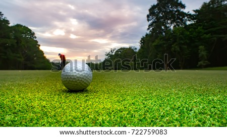 Golf ball on green on sunset and golfer background. Beautiful course overlooking layout fairway and tree line around. Light sunset sent to affect player and green is impressive to use in golf course.