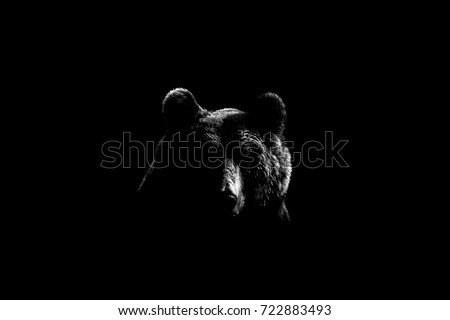 Brown bear face contour in black and white. Bear face on black background.  #722883493