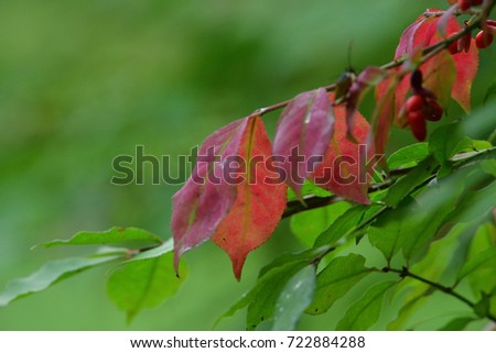 red leaves #722884288